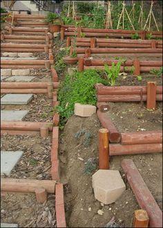 Terraced hillside vegetable garden! I think I've found the solution to my tiny, hillside yard.