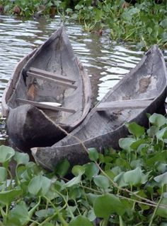 This is a boat.This is one of the many tools the Wampanoag Indians used.They are canoes.This is how they crossed rivers and lakes. Native American Baby, Native American Tribes, Native Americans, Woodland Indians, Cowboys And Indians, May Flowers, People Of The World, Native Art, Plymouth