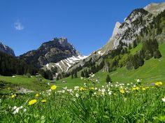 Auf der Alp Sämtis. Hier geht's weiter hinauf zum... [hikr.org]