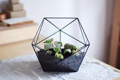 Handmade Glass Terrarium | Box Wood Tree on Etsy