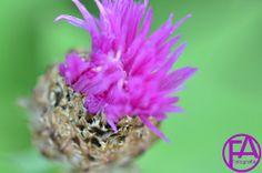 Makro | www.FeenArt.de | Claudia Böttcher | Flower | Blume | Blüte | DSC_4576FAFGk