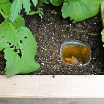 Here's a simple and environmentally friendly way to get rid of them, a… :: Hometalk