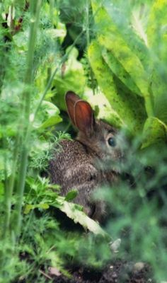 Spotted a rabbit in the vegetable garden! Farm Animals, Cute Animals, Beatrix Potter, All Gods Creatures, My Secret Garden, Hamsters, Fauna, Farm Life, Country Life