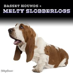 Melty Slobberlogs?    I like to think of them as four-legged Angels!