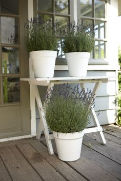 the smell of lavender in this green basics growpot is fantastic #elho #pot #lavender #growpot #patio #terrace #balcony