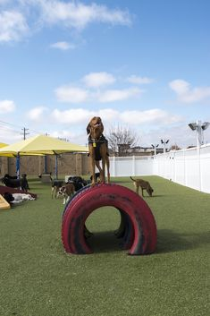 Family Dogs is a family owned and operated business established to offer high quality, convenient dog daycare, boarding and grooming services for your dog. They keep all their dogs happy by letting them play on Dog Kennel Cover, Diy Dog Kennel, Backyard Dog Area, Backyard Ideas, Backyard Designs, Backyard Decorations, Outdoor Play Areas, Indoor Outdoor, Outdoor Dog Area