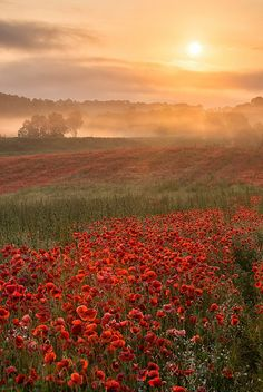 ~~Poppy Dawn | a misty dawn at Blackstone Nature Reserve, Bewdley, Wyre Forest District, Worcestershire, England by jactoll~~
