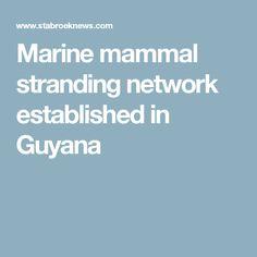 Marine mammal stranding network established in Guyana