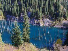 Underwater forest in Kaindy Lake