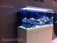http://www.acuaristica.com/blog/2012/06/la-mejor-relacion-calidad-precio-en-un-skimmer-probablemente/