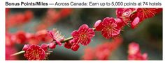 Rewards Canada: Earn 1,000 Bonus Marriott Rewards Points per night at over 70 locations in Canada