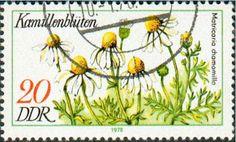 german chamomile stamp.