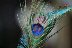 Yup peacock wedding