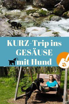 Gesäuse mit Hund - Tipps für 2 Tage unterwegs in der Steiermark Yorkie, Roadtrip, National Parks, River, Nature, Hotels, Lost, Museum, Camping