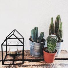 #cactus #green #woodbox #industrial #blackhouse #tealight #citygarden #ikea #sostrenegrene #amsterdam #home