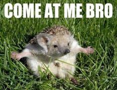 Attack Of The Funny Animals (36 Photos) LOL!