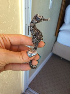 A sea horse found while vacationing in Captiva Island, FL. 11/10/14 ☺️