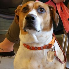 Beautiful Lulu Belle!  #dogsofinstagram #mixedbreed #adoptdontshop #gooddog #ozanimalhospital #lincolnpark #chicago