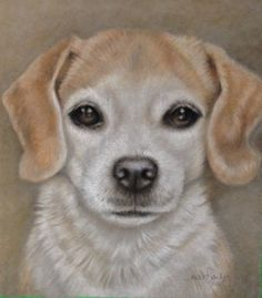 Molly 8x10 Derwent Pastel on Velour