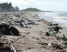 La contaminación, causada por el hombre, en una playa de Nueva York causó varios problemas como contaminacion en el agua y la muerte de algunos animales costeros, ya que se lo confundieron con comida .