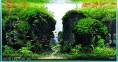 Live Aquarium, Planted Aquarium, New Taipei City, Vivarium, Aquascaping, Plant Needs, Aga, Paths, Really Cool Stuff