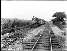 Kaala Oahu - Train Passing Sugar cane Fields Near Ewa, Hawaii 1915 - Tibbets.  OAHU