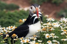 Come to Wales. Stay in May. The puffins do! http://www.qualitycottages.co.uk/aroundwales/may-bank-holiday-wales