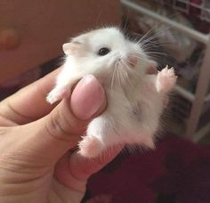 🐁🐁🐁🐁🐁🐁🐁🐁🐁🐁🐁🐁🐁🐁🐁🐁🐁🐁🐁🐁🐁🐁🐁🐁🐁🐁🐁🐁🐁🐁🐁🐁🐁🐁🐁🐁🐁🐁🐁🐁🐁🐁🐁 Cute Animals, Baby Animals, Kitty, Hamsters, Animaux, Animals, Pretty Animals, Little Kitty, Kitten