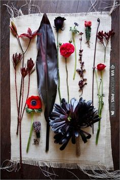 Red and Black Wedding Flowers | CHECK OUT MORE IDEAS AT WEDDINGPINS.NET | #weddings #weddingflowers #flowers
