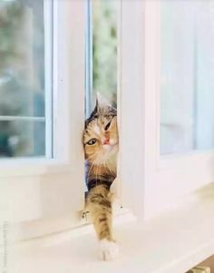 Your cat may become more clingy as he ages, wanting to be with you every moment of the day or night. Animals And Pets, Funny Animals, Cute Animals, Crazy Cat Lady, Crazy Cats, Gato Calico, Cat Window, Photo Chat, Cat Boarding