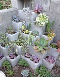 Succulent cinderblock garden. This is a neat DIY idea!