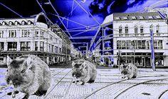 Duisburg Marxloh im Fokus der Stadtverwaltung
