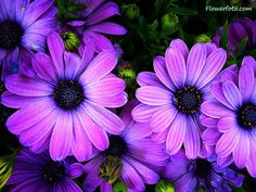 exotic flower photos free | tropical flower image free , Tropical Flowers