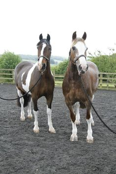 Edward and Nancy retire from Horse Rangers to spend their days at Speen Farm - July 2012