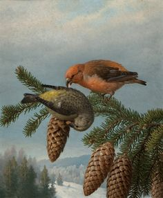 Ferdinand Henricsson von Wright (1822-1906) —   Crossbill,  1888 (660×800) Ferdinand, Bird Art, Finland, Vintage Art, Sculptures, Birds, Painters, Animals, 19th Century