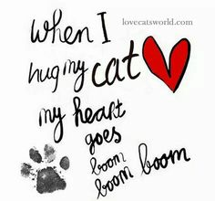 And it also calms me Funny Cat Memes, Funny Cats, Funny Quotes, Pet Quotes, Crazy Cat Lady, Crazy Cats, Interesting Animals, Cat People, Animal Quotes