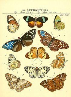 Genera insectorum Linnaei et Fabricii iconibus illustrata. c.1  Vitoduri Helvetorum :Prostat apud Henric. Steiner et Socios,MDCCLXXXIX [1789]