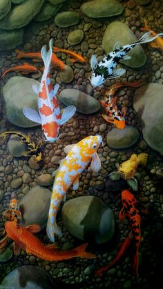 70 best koi images koi ponds beautiful fish carp - Carp wallpaper iphone ...