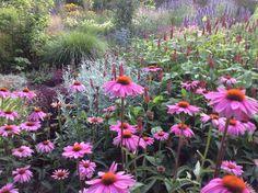 Border met Piet Oudolf planten Geranium Macrorrhizum, Geranium Rozanne, Red Robin, Plant Projects, Green Garden, Native Plants, Garden Styles, Garden Inspiration, Garden Ideas