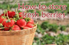 how to store fresh strawberries at www.julieverse.com