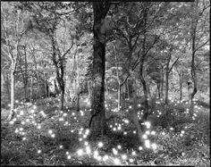 tokihiro sato's light photographs