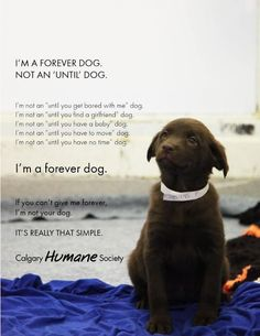 Can't believe someone could make a dog anything but a forever dog!