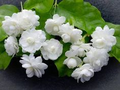 Ful çiçeği