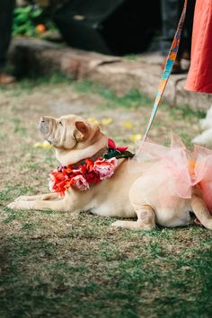 adorable flower girl pup
