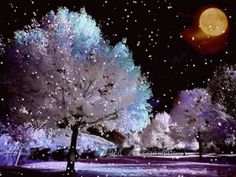 SNOWY NIGHT ..GIF