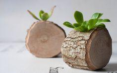 Succulent planter Planter branch Small wooden by LuzDelBosque