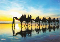 1pcs Cable Beach,Broome, Western Australia Postcard - Group of People on Camels