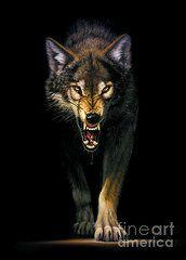 Animals Art - Stalking Wolf by MGL Studio - Chris Hiett