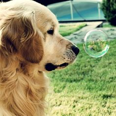 pup vs bubble...lol