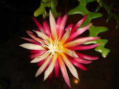 cactos e flores 192